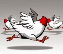 pollo sin cabeza