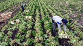 Trabajadores campo